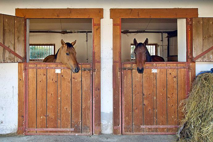 Horseback Riding Club of Slupenec | Horse-riding Club Slupenec | The pub | Settlement Slupenec - Český Krumlov